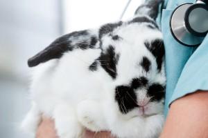 A Career in Veterinary Medicine